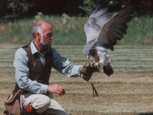 Birds of Prey Activity
